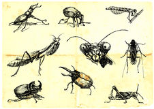 Beetles and insects. Hand-drawn collection. Beetles and insects. (Black line on the old paper.)Hand-drawn collection. Beetles and insects. (Black line on the old Stock Photo