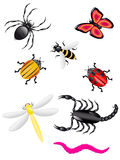 Beetles and insects colors. Illustration Stock Images
