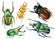 Beetles on an isolated white background, watercolor illustration, green scarab beetle