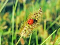 Ladybug on grass green on background Stock Image