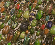Beetles of Many Colors, Montréal Insectarium Royalty Free Stock Photography
