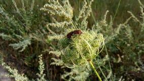 Beetles royalty free stock photos