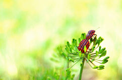 Beetles in nature. A sunny day with beetles in nature Stock Photo