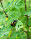Beetles. In the park in the north-west of Chelyabinsk. Spring 2017g Stock Image
