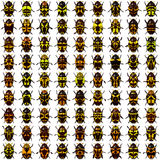 Beetles. Rows of yellow beetles on white Royalty Free Stock Photo