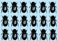 Beetles Seamless Pattern Stock Photo