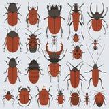 Beetles set Stock Image