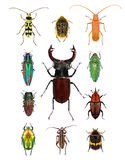 Beetles Royalty Free Stock Images