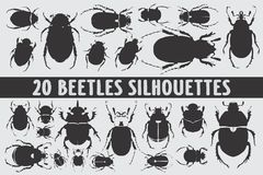 20 Beetles Silhouettes various design set vector illustration