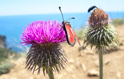 A beetles sits on a flower Royalty Free Stock Photos