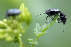 Beetles sitting on a bud Stock Photo