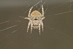Beetles, spiders, insects Stock Photo