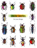 Beetles. Vector beetles with patterns for your design, isolated objects Stock Images