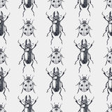 Beetles vintage seamless pattern. Beetles seamless pattern. Vintage hand drawn moustached insects and ladybugs background Royalty Free Stock Photos