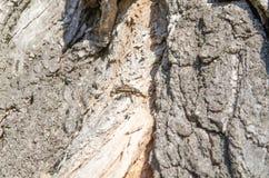 beetling Δέντρο Ξύλινος φλοιός Ανακουφίσεις του δέντρου r Φυσικές ανακουφίσεις r Φυσικές συστάσεις r στοκ εικόνες