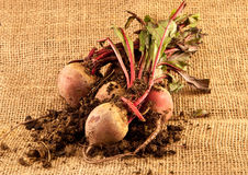 Beetroot. Freshly harvested beetroot on hessian Royalty Free Stock Images