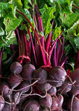 Beetroot Royalty Free Stock Photos