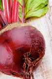 Beetroot Obraz Royalty Free