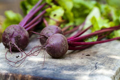 beetroot Obraz Stock
