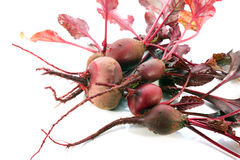 beetroot obrazy stock