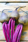 Beetroot (Beta vulgaris) close-up Stock Photography
