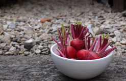 Beetroot in a Bowl Royalty Free Stock Photo
