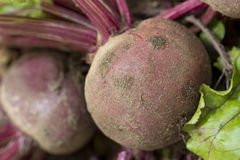 Beetroot, Close Up Royalty Free Stock Photography