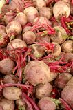 Beetroot close-up view Stock Photography