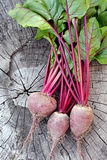 Beetroot. Fresh Organic Beets From Garden. Stock Photos