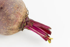Beetroot. Stock Photos