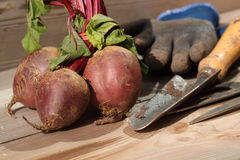 Beetroot garden tools Royalty Free Stock Image