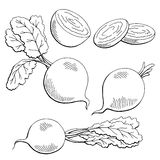 Beetroot graphic vegetable black white  sketch illustration Royalty Free Stock Photo