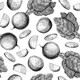 Beetroot hand drawn  seamless pattern. Vegetable engraved Stock Photography