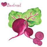 Beetroot. Hand drawn watercolor painting on white. Beetroot with leaf isolated on white background. Hand drawn watercolor set on vector illustration Stock Photography