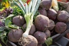 Beetroot_harvest foto de stock