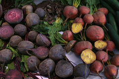 beetroot harvest Royalty Free Stock Images