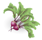 Beetroot illustration Royalty Free Stock Photos