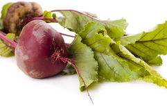 Beetroot isolated Stock Photography