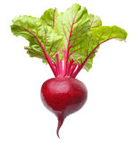 Beetroot  isolated Royalty Free Stock Photography
