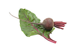 Beetroot and its leaf Stock Photography