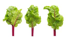 Beetroot leaves, fresh beet leaf set Stock Photo