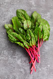 Beetroot leaves Stock Images
