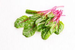 Beetroot leaves Royalty Free Stock Photos