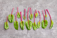Beetroot leaves stock image