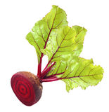 Beetroot with leaves Stock Photography