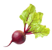 Beetroot with leaves. Isolated on white Royalty Free Stock Photos