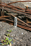 Beetroot Marker. A section of a hand made Wicker Fence Panel in an urban garden with a hand written garden marker, set in the ground marking the position of Royalty Free Stock Image