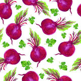 Beetroot parsley watercolor painting illustration isolated on white background, Hand drawn seamless pattern, decorative Royalty Free Stock Photos