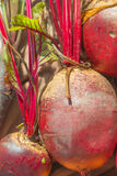 Beetroot Plant Stock Images