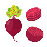 Beetroot and slices. Cartoon flat style Stock Photos